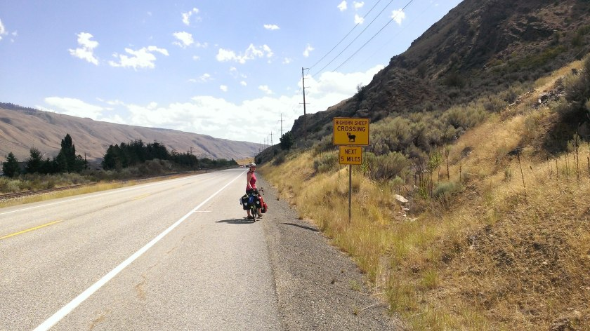 Bighorn sheep sign on the way to Wenatchee